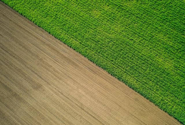 W przeszłości mak bardzo zniszczył twoje uprawy zbóż ozimych?