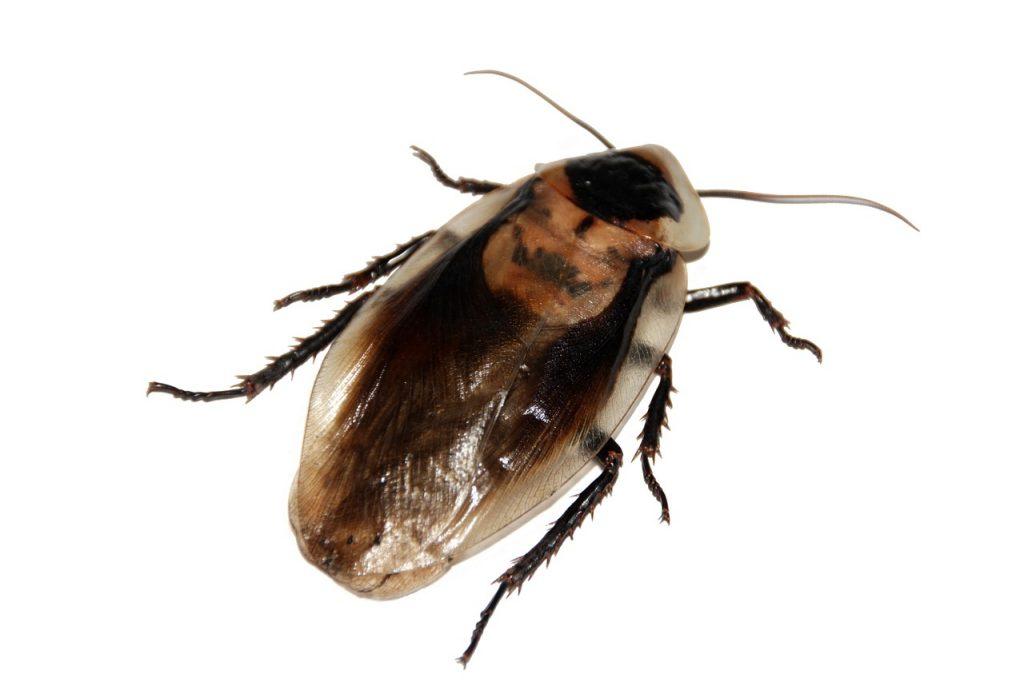 Usuwanie robaków z budynków