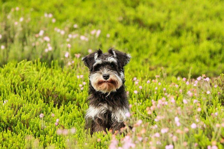 Inteligentne porady dotyczące opieki nad psem